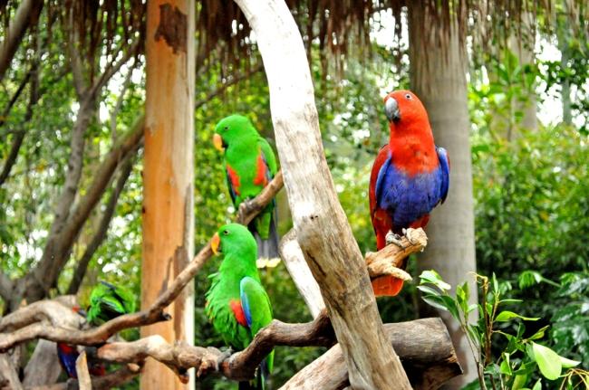 00E_Zoo Chimelong (1)