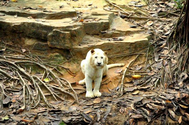 00E_Zoo Chimelong (10)