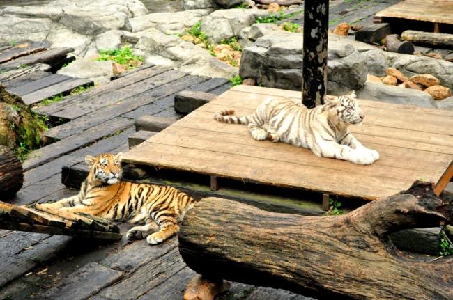 00E_Zoo Chimelong (11)