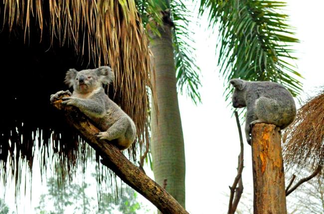 00E_Zoo Chimelong (2)