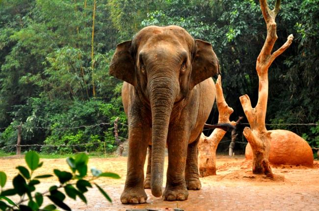 00E_Zoo Chimelong (3)
