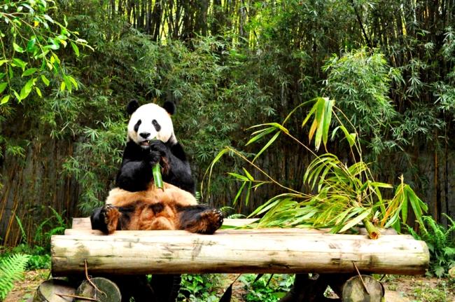 00E_Zoo Chimelong (5)